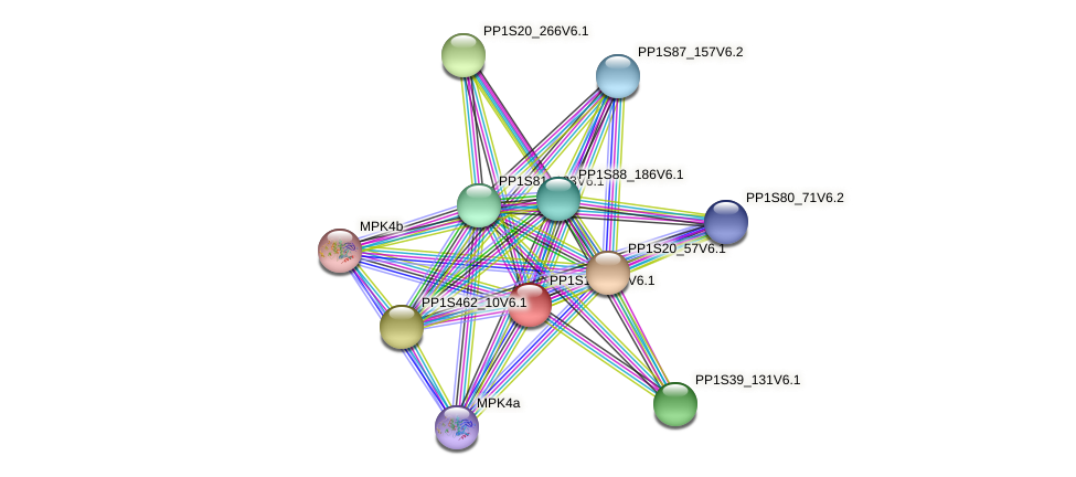 PP1S16_334V6.1 protein (Physcomitrella patens) - STRING interaction network