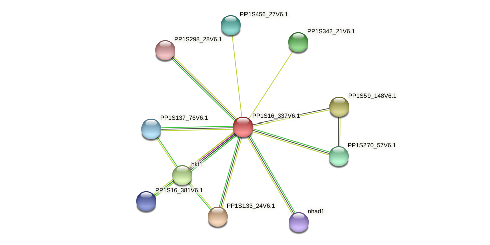 PP1S16_337V6.1 protein (Physcomitrella patens) - STRING interaction network