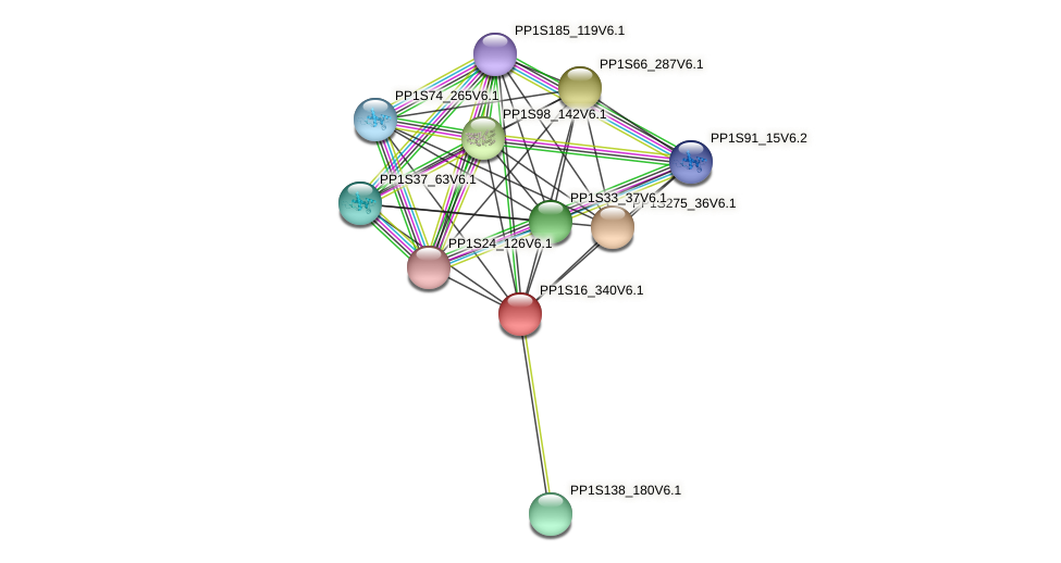 PP1S16_340V6.1 protein (Physcomitrella patens) - STRING interaction network