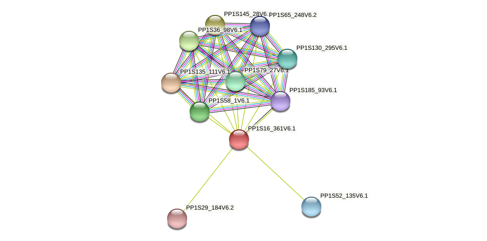 PP1S16_361V6.1 protein (Physcomitrella patens) - STRING interaction network