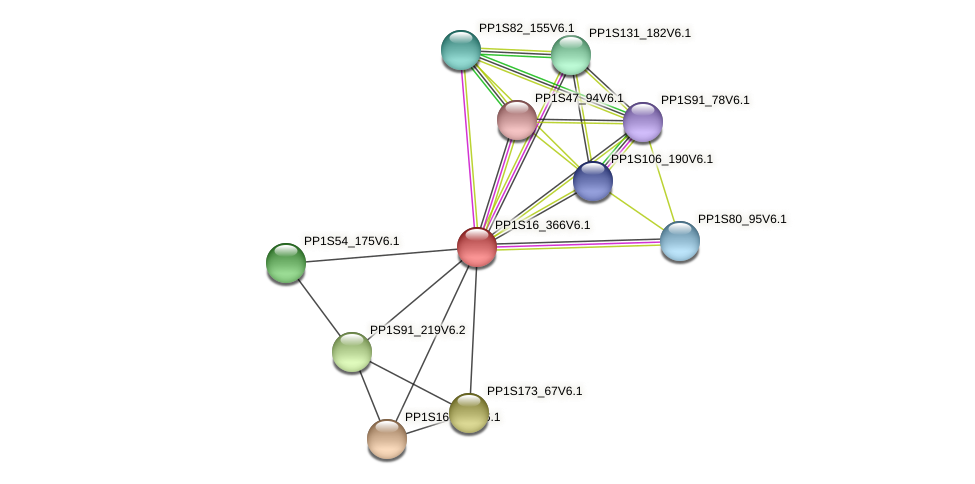 PP1S16_366V6.1 protein (Physcomitrella patens) - STRING interaction network