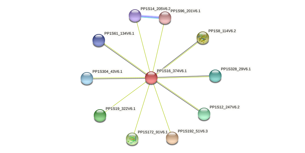 PP1S16_374V6.1 protein (Physcomitrella patens) - STRING interaction network