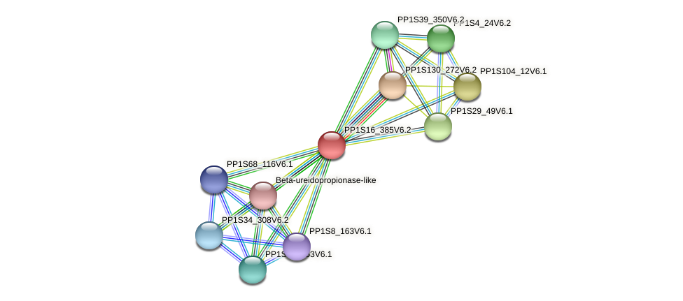 PP1S16_385V6.1 protein (Physcomitrella patens) - STRING interaction network