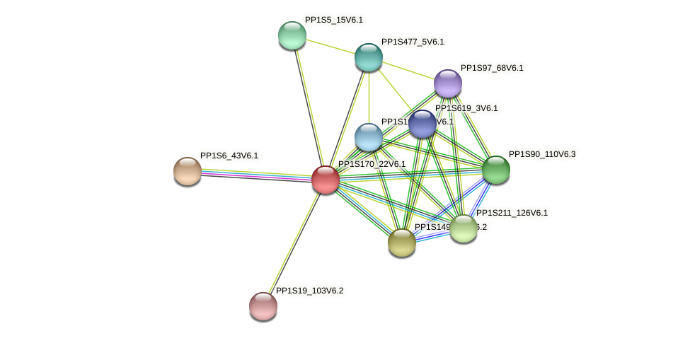 PP1S170_22V6.1 protein (Physcomitrella patens) - STRING interaction network