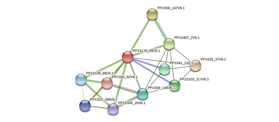 PP1S170_49V6.1 protein (Physcomitrella patens) - STRING interaction network