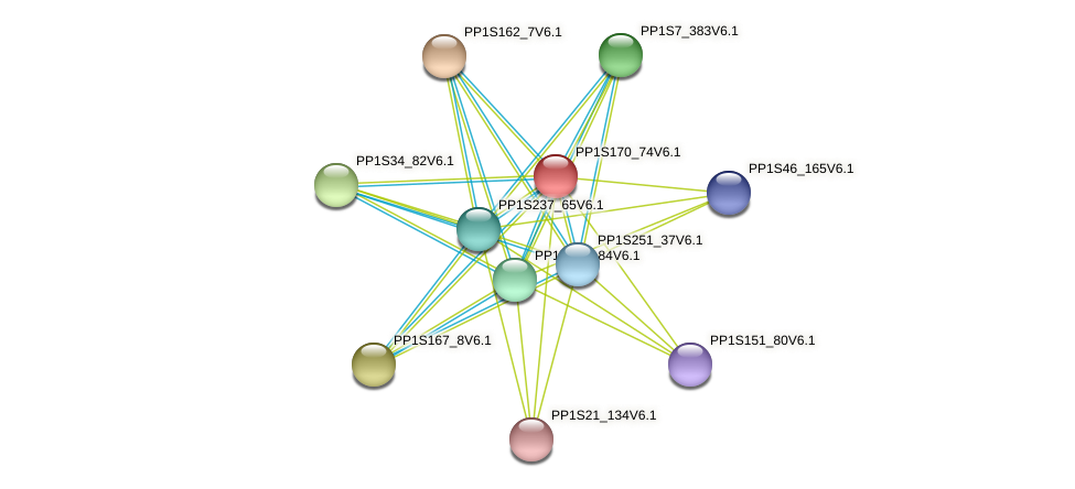 PP1S170_74V6.1 protein (Physcomitrella patens) - STRING interaction network