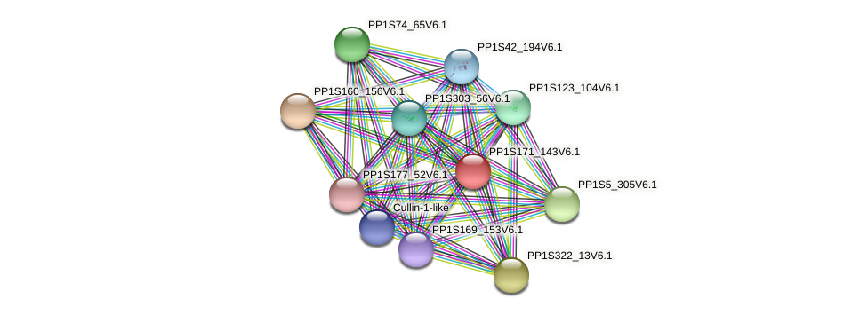 PP1S171_143V6.1 protein (Physcomitrella patens) - STRING interaction network