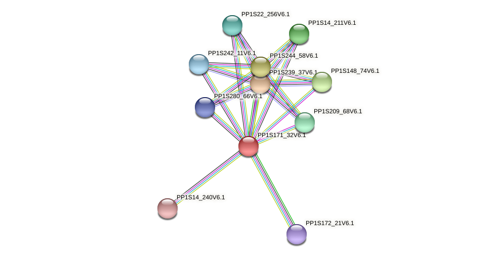 PP1S171_32V6.1 protein (Physcomitrella patens) - STRING interaction network