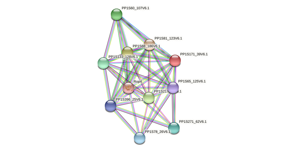 PP1S171_39V6.1 protein (Physcomitrella patens) - STRING interaction network