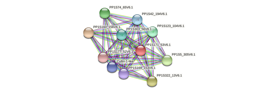 PP1S171_53V6.1 protein (Physcomitrella patens) - STRING interaction network