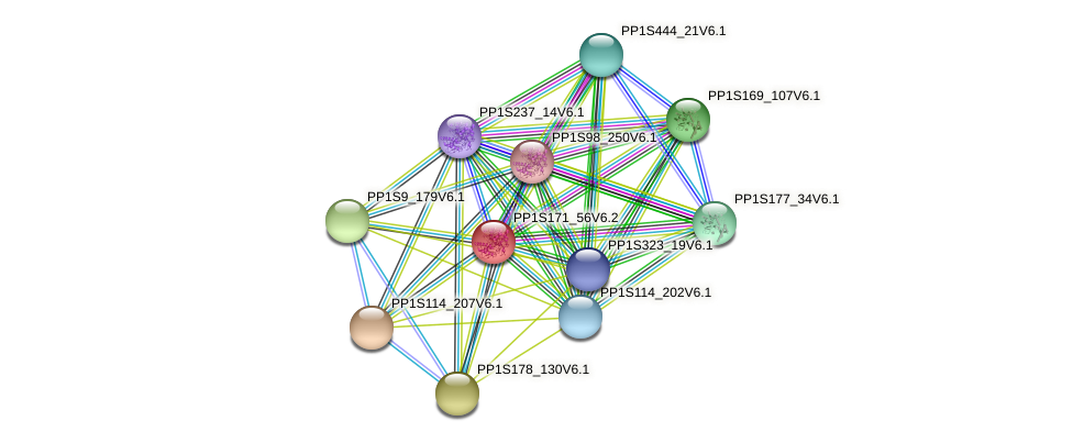 PP1S171_56V6.1 protein (Physcomitrella patens) - STRING interaction network