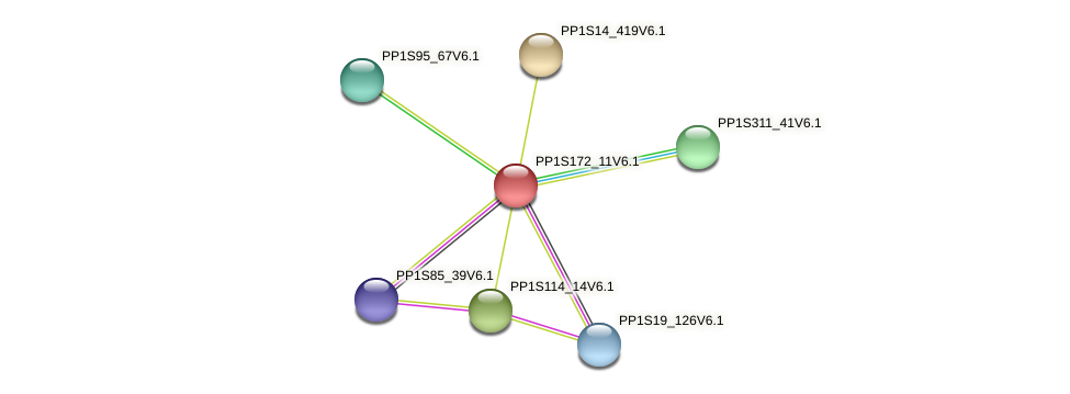 PP1S172_11V6.1 protein (Physcomitrella patens) - STRING interaction network