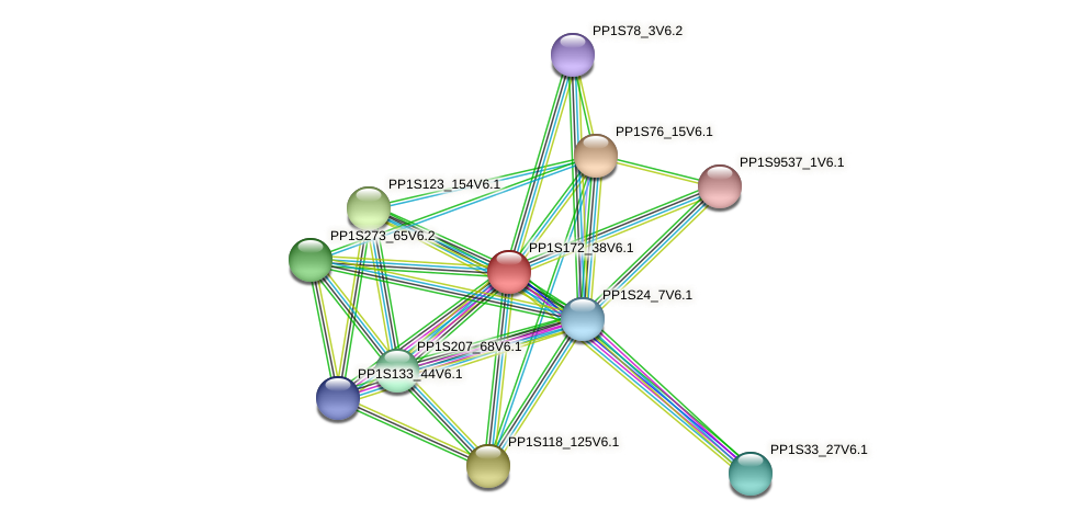 PP1S172_38V6.1 protein (Physcomitrella patens) - STRING interaction network