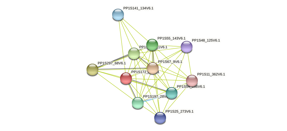PP1S172_43V6.1 protein (Physcomitrella patens) - STRING interaction network