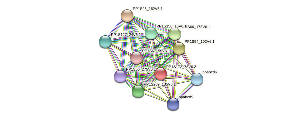 PP1S172_78V6.1 protein (Physcomitrella patens) - STRING interaction network