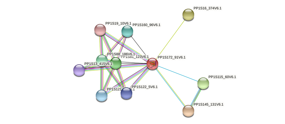PP1S172_91V6.1 protein (Physcomitrella patens) - STRING interaction network