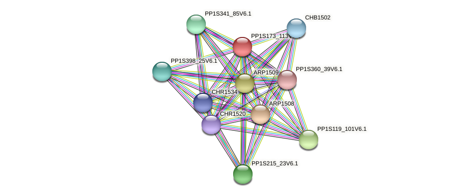 PP1S173_113V6.1 protein (Physcomitrella patens) - STRING interaction network