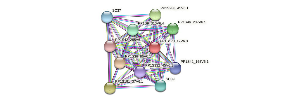 PP1S173_12V6.1 protein (Physcomitrella patens) - STRING interaction network