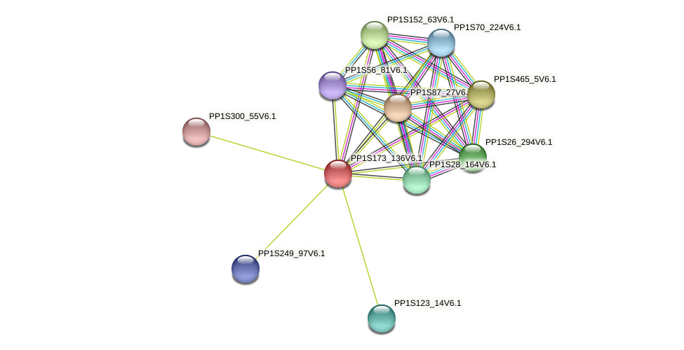 PP1S173_136V6.1 protein (Physcomitrella patens) - STRING interaction network