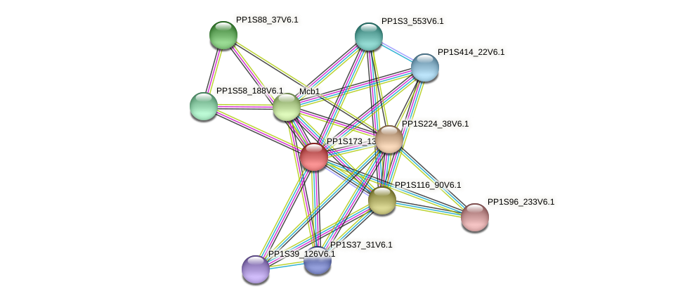 PP1S173_137V6.1 protein (Physcomitrella patens) - STRING interaction network