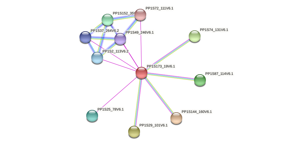 PP1S173_19V6.1 protein (Physcomitrella patens) - STRING interaction network