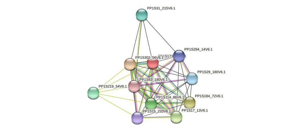 PP1S173_64V6.1 protein (Physcomitrella patens) - STRING interaction network