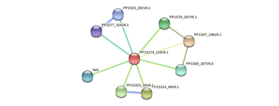 PP1S174_116V6.1 protein (Physcomitrella patens) - STRING interaction network