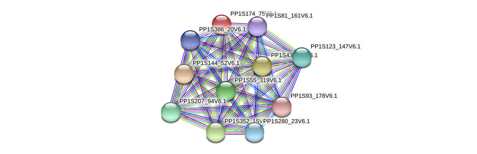 PP1S174_75V6.1 protein (Physcomitrella patens) - STRING interaction network