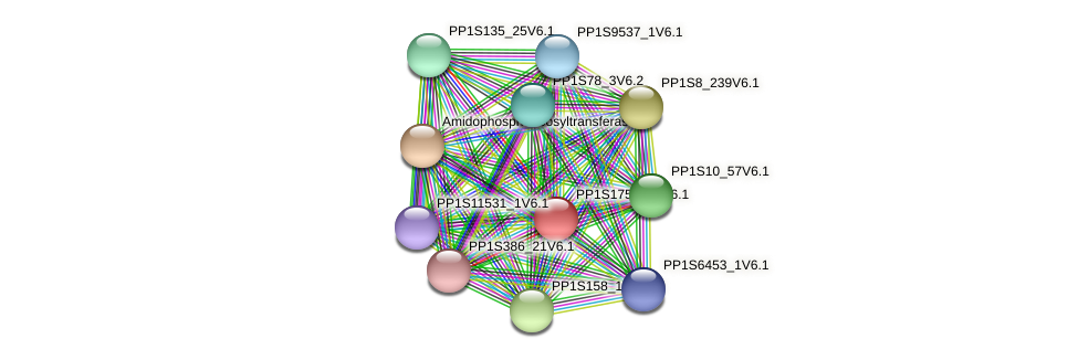 PP1S175_128V6.1 protein (Physcomitrella patens) - STRING interaction network