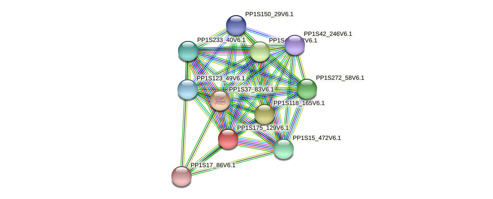 PP1S175_129V6.1 protein (Physcomitrella patens) - STRING interaction network