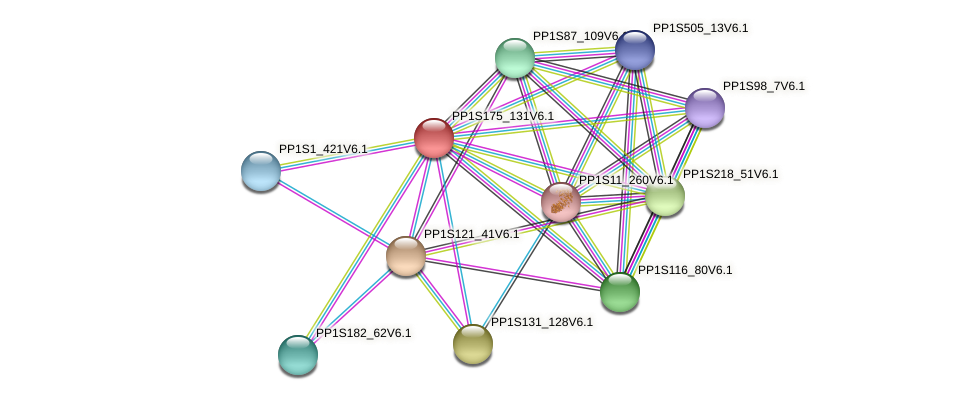 PP1S175_131V6.1 protein (Physcomitrella patens) - STRING interaction network