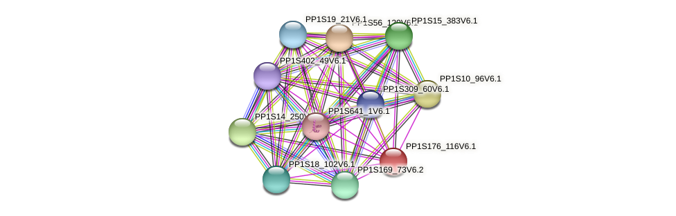 PP1S176_116V6.1 protein (Physcomitrella patens) - STRING interaction network