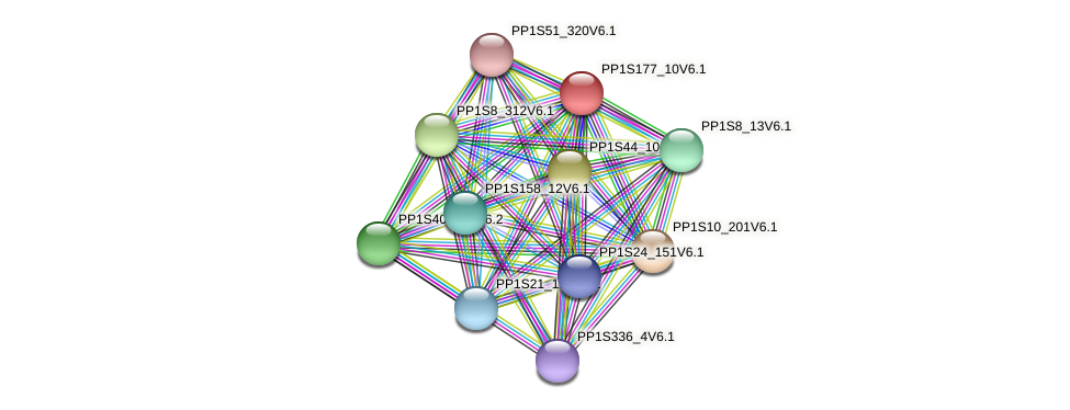 PP1S177_10V6.1 protein (Physcomitrella patens) - STRING interaction network