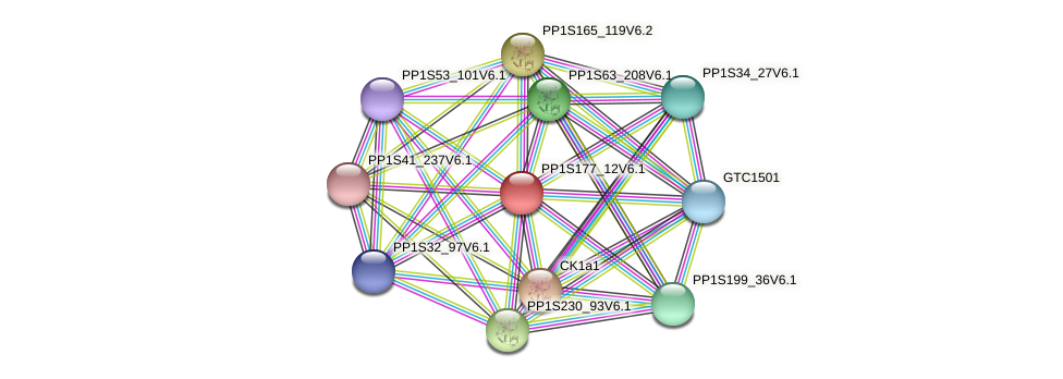 PP1S177_12V6.1 protein (Physcomitrella patens) - STRING interaction network
