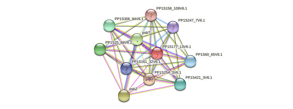 PP1S177_13V6.1 protein (Physcomitrella patens) - STRING interaction network