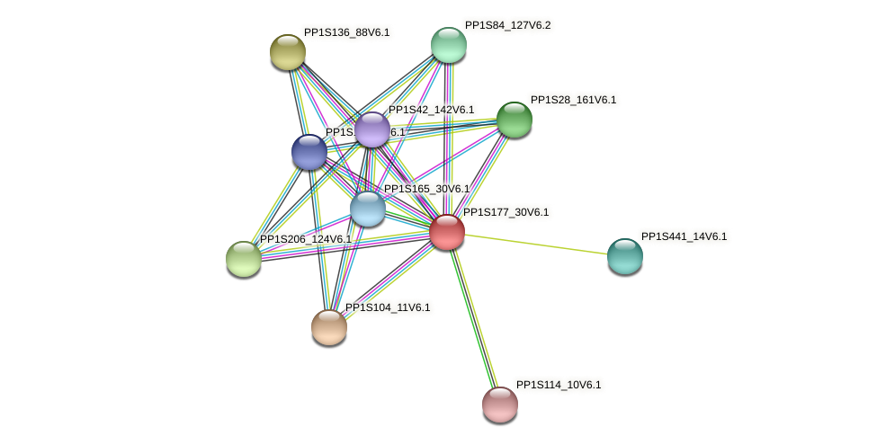 PP1S177_30V6.1 protein (Physcomitrella patens) - STRING interaction network