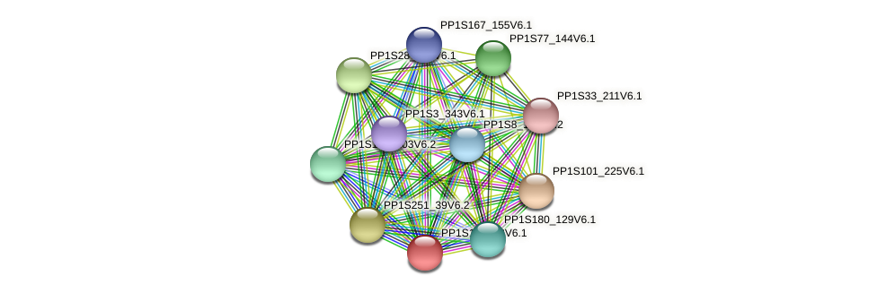 PP1S177_33V6.1 protein (Physcomitrella patens) - STRING interaction network