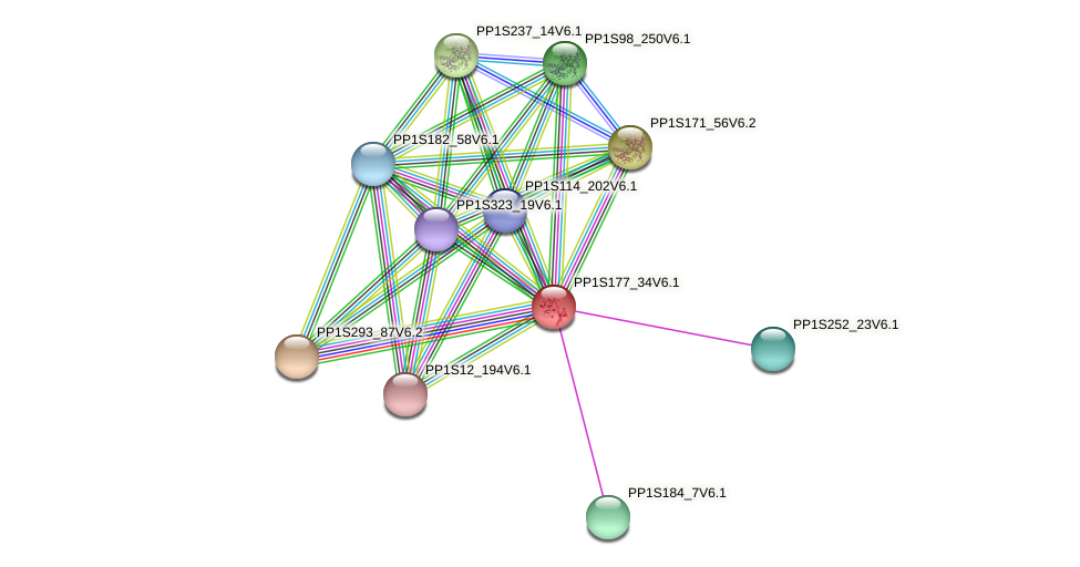 PP1S177_34V6.1 protein (Physcomitrella patens) - STRING interaction network