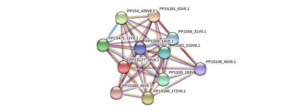 PP1S177_38V6.1 protein (Physcomitrella patens) - STRING interaction network