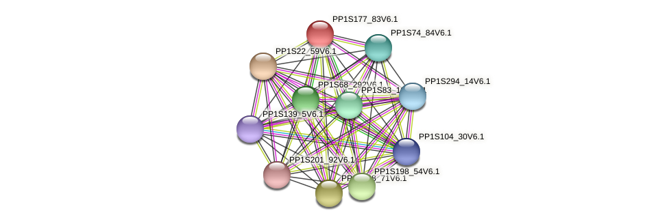 PP1S177_83V6.1 protein (Physcomitrella patens) - STRING interaction network