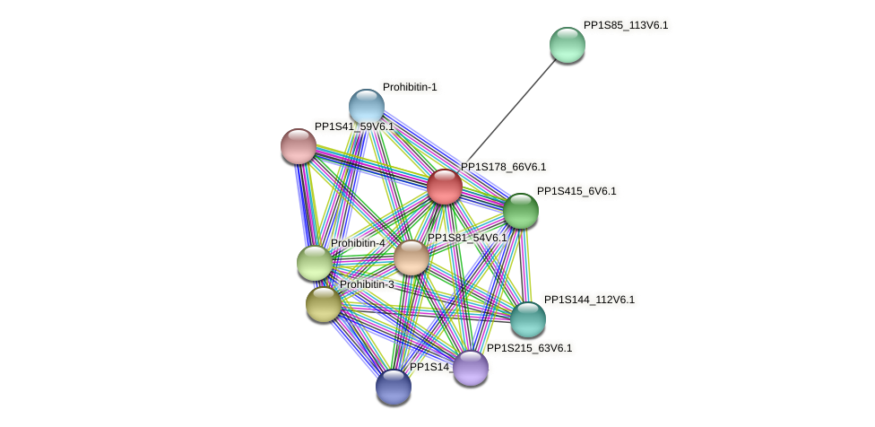 PP1S178_66V6.1 protein (Physcomitrella patens) - STRING interaction network
