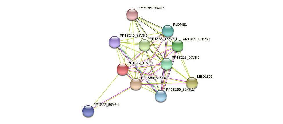 PP1S17_11V6.1 protein (Physcomitrella patens) - STRING interaction network