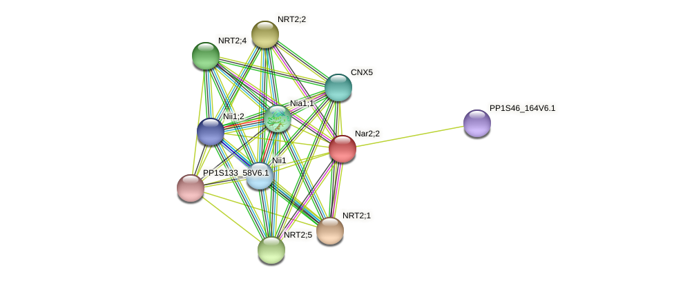 PP1S17_201V6.1 protein (Physcomitrella patens) - STRING interaction network