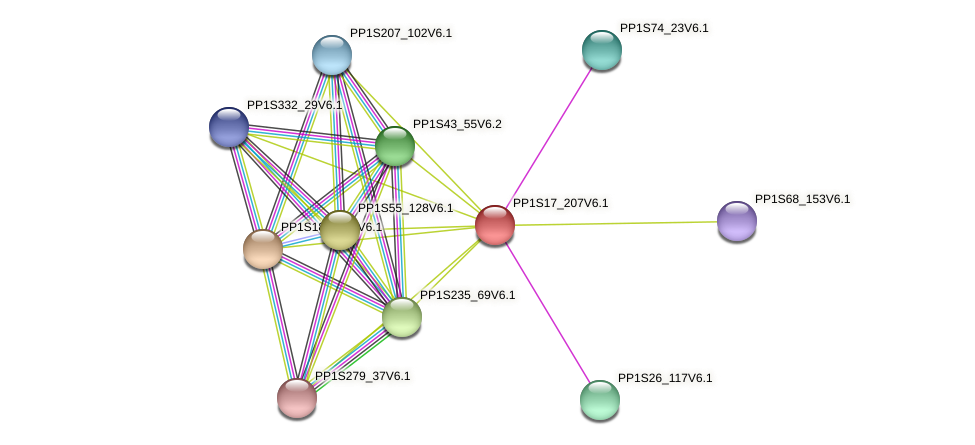 PP1S17_207V6.1 protein (Physcomitrella patens) - STRING interaction network