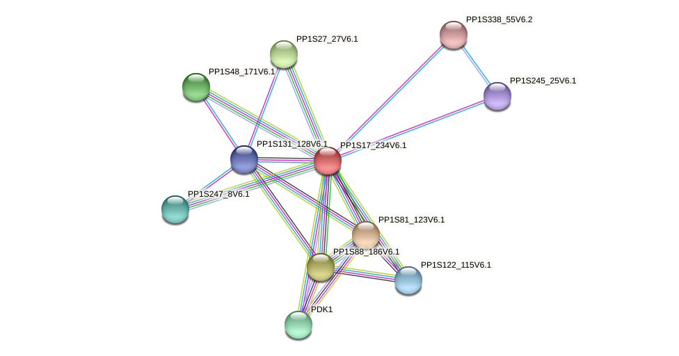 PP1S17_234V6.1 protein (Physcomitrella patens) - STRING interaction network