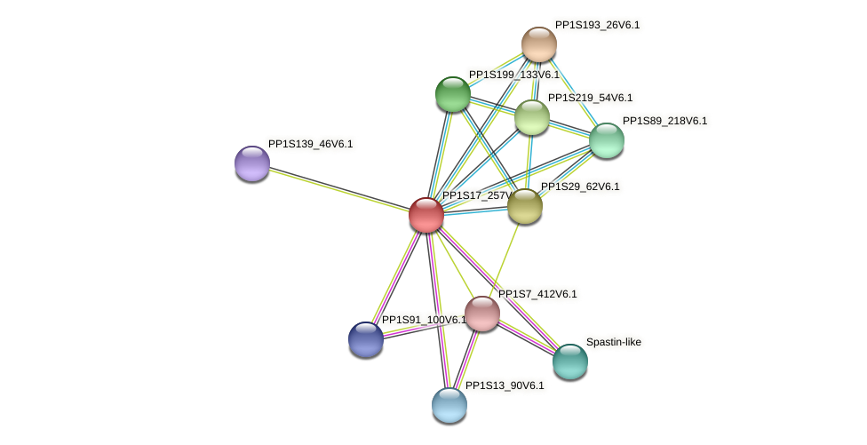 PP1S17_257V6.1 protein (Physcomitrella patens) - STRING interaction network