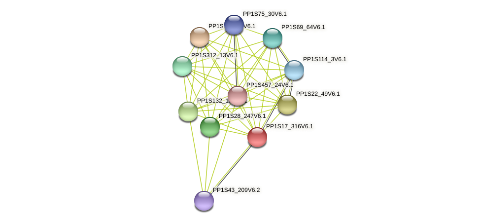 PP1S17_316V6.1 protein (Physcomitrella patens) - STRING interaction network