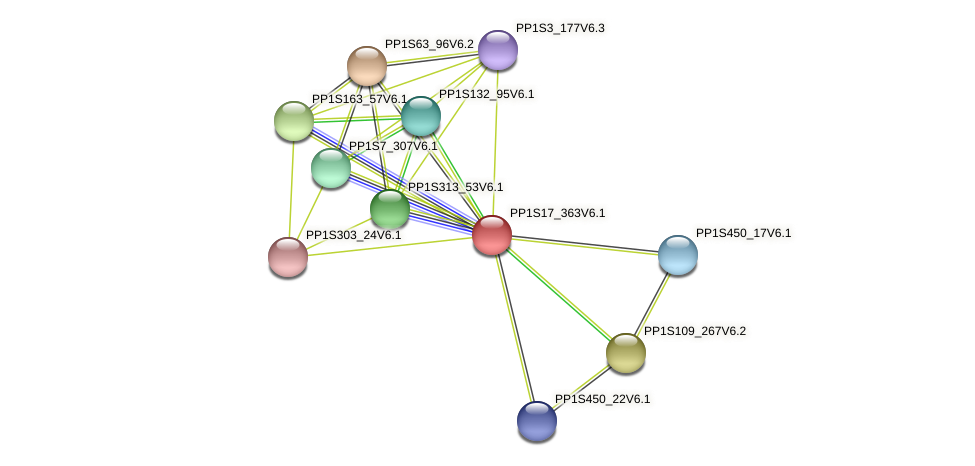 PP1S17_363V6.1 protein (Physcomitrella patens) - STRING interaction network