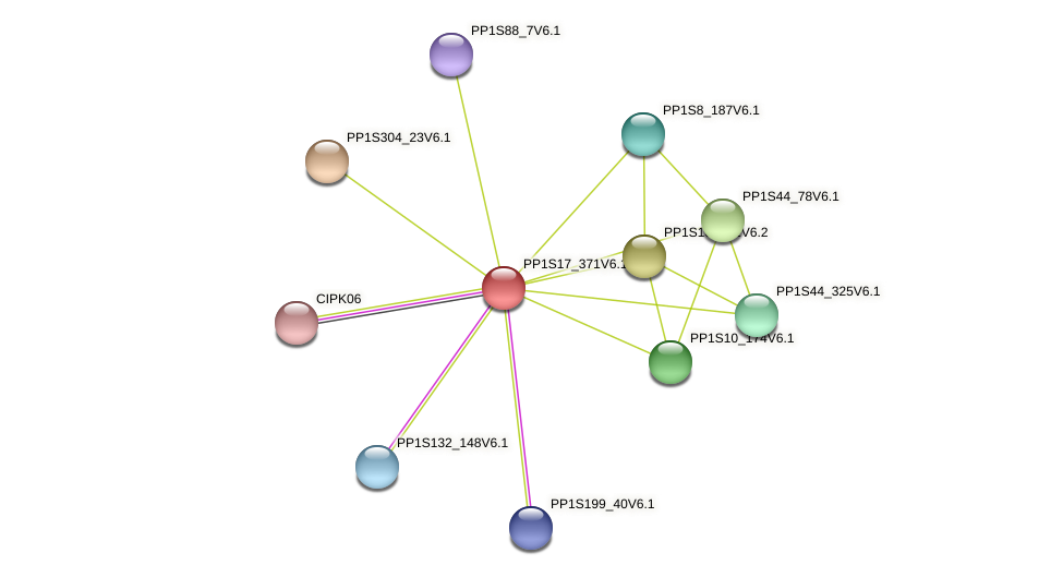 PP1S17_371V6.1 protein (Physcomitrella patens) - STRING interaction network