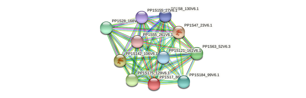 PP1S17_86V6.1 protein (Physcomitrella patens) - STRING interaction network